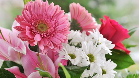 Kukka ja Lahja Helli ja Viku Tmi