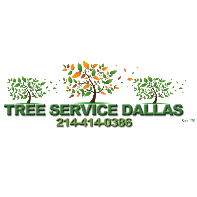 Tree Service Dallas