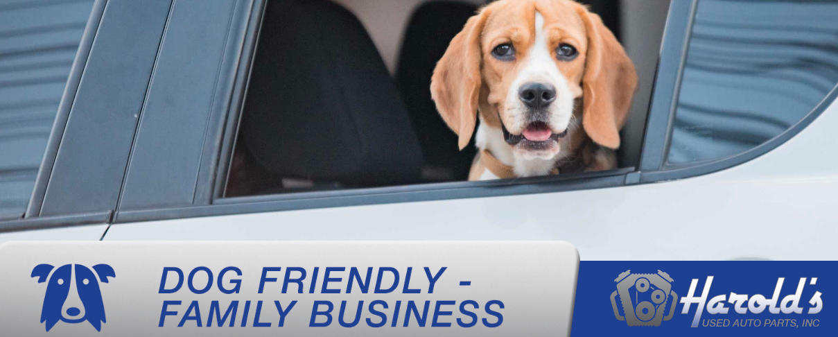Harold's Used Auto Parts, Inc is dog friendly!