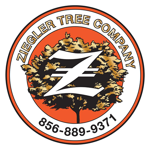 Ziegler Tree Company - Berlin, NJ - Tree Services