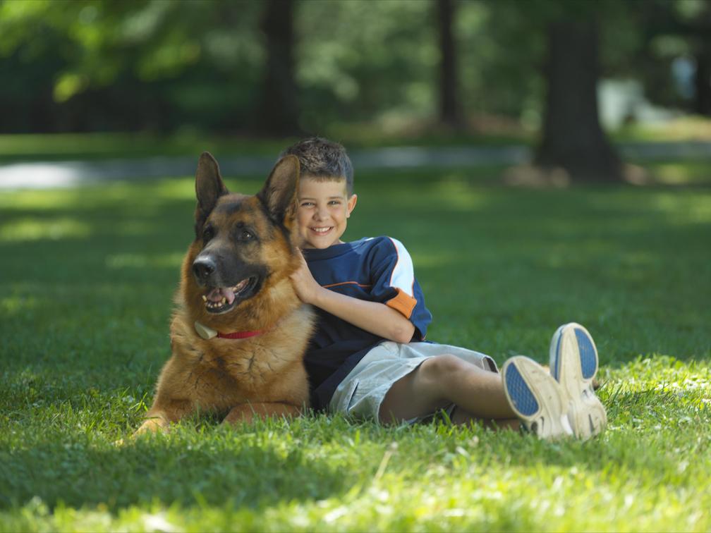Indiana Dog Fence image 2