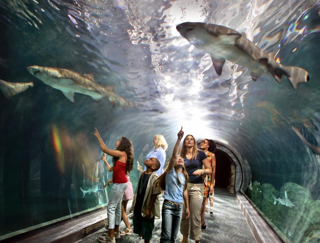 Adventure Aquarium Coupons Near Me In Camden 8coupons