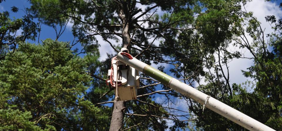 Glastonbury Tree Care