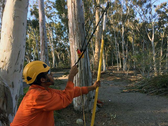 Cortez Tree Care Inc