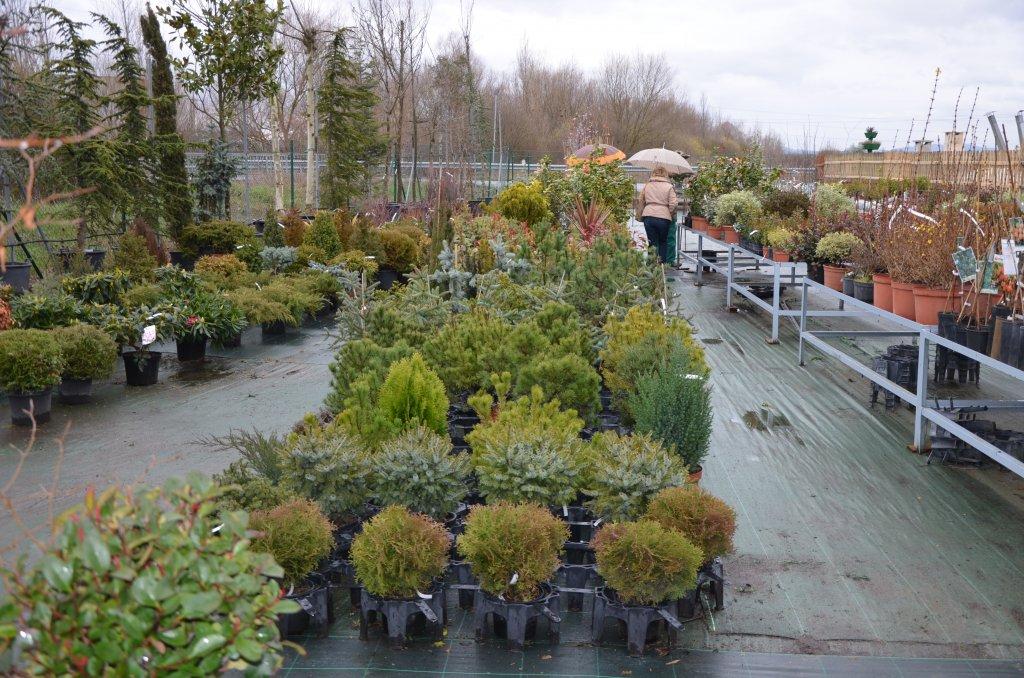 Jardinería Abeto SL