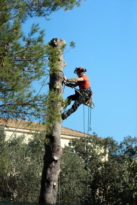 It is What it is Tree Service
