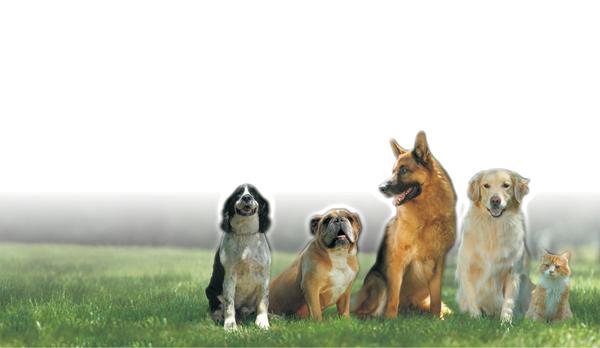Indiana Dog Fence image 0