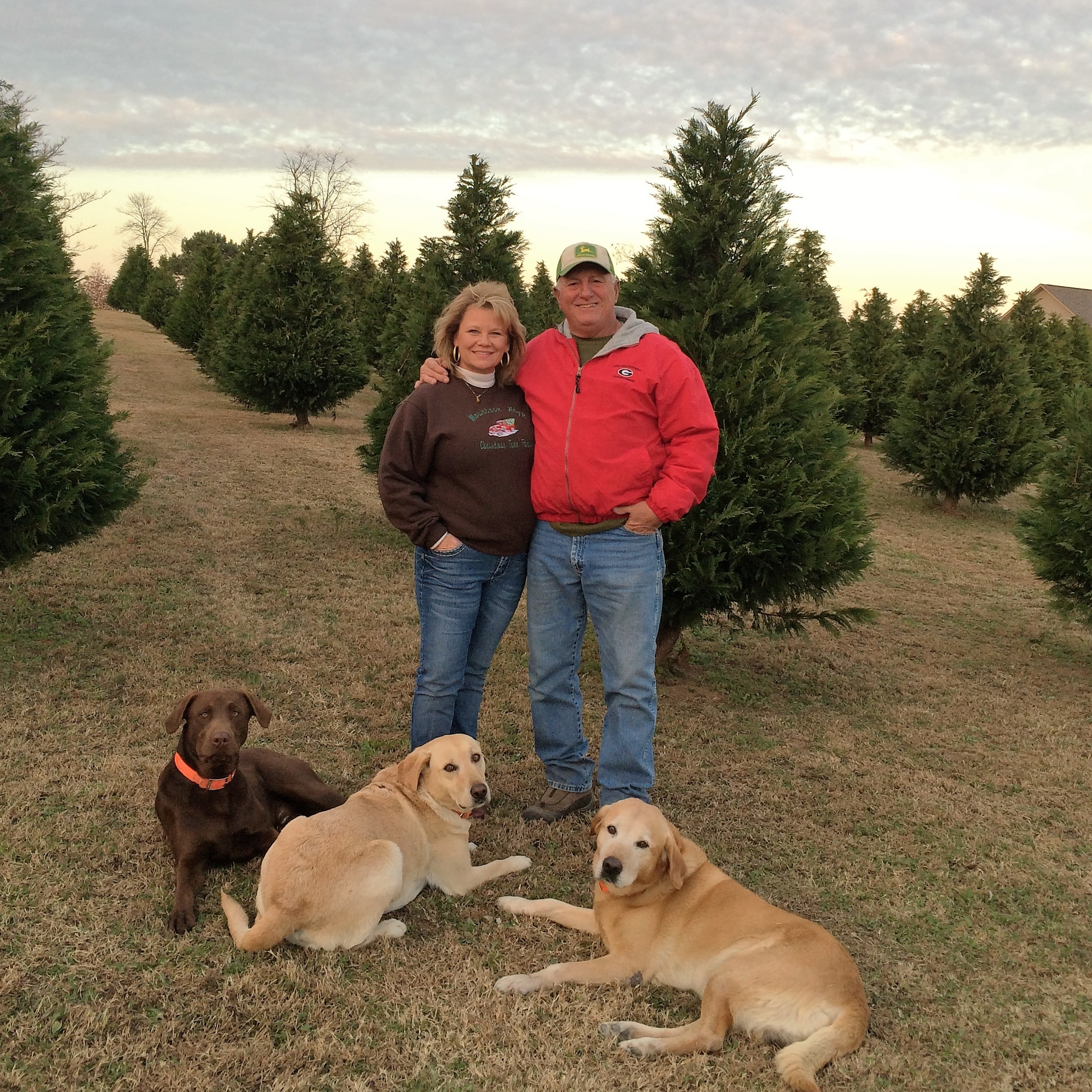 Mountain High Christmas Tree Farm