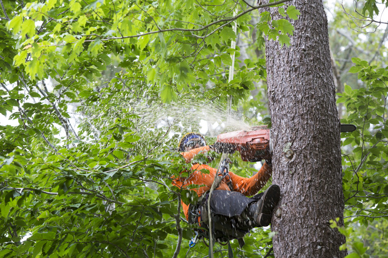 Goodwin's Tree Services