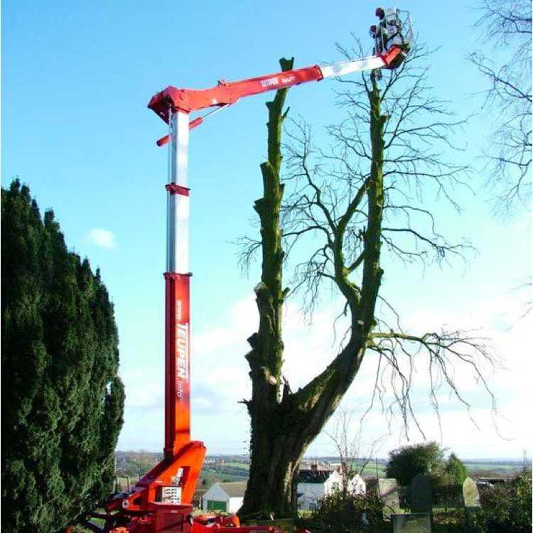 D M Tree & Landscape Contractors Ltd