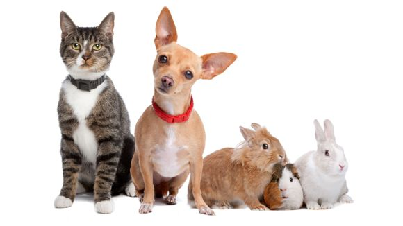 Länsirannikon eläinklinikka