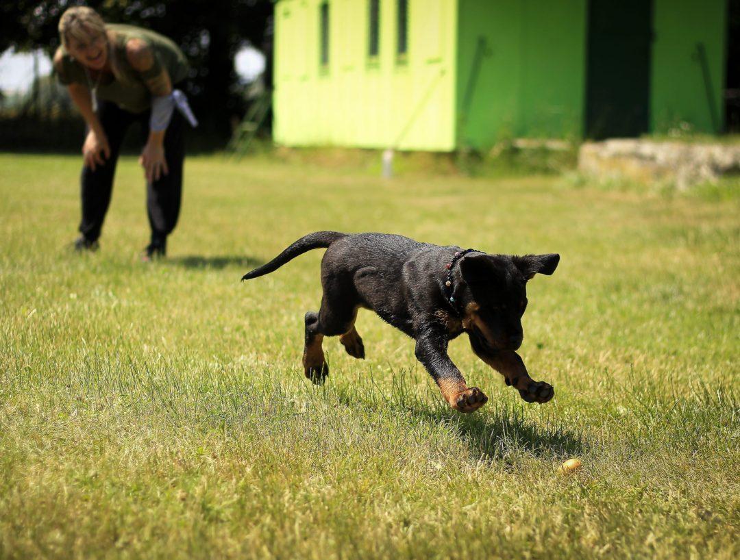 Dog Training Near Charleston Sc
