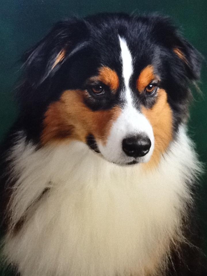 Dog Training Venice Fl