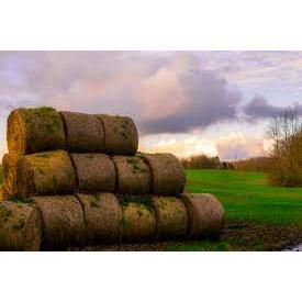 Long Sod Farm