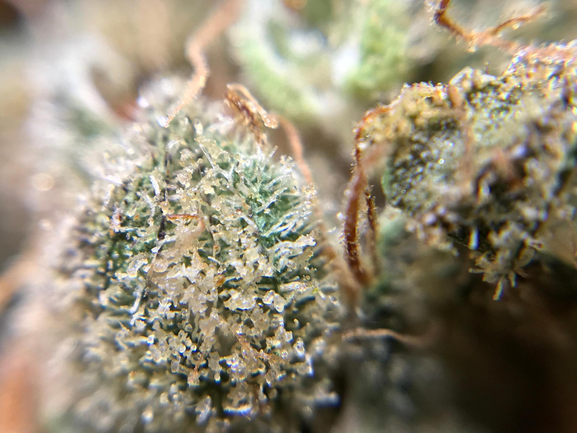 Star Buds Medical Marijuana Dispensary Baltimore