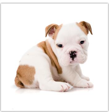 American Dog Club image 7