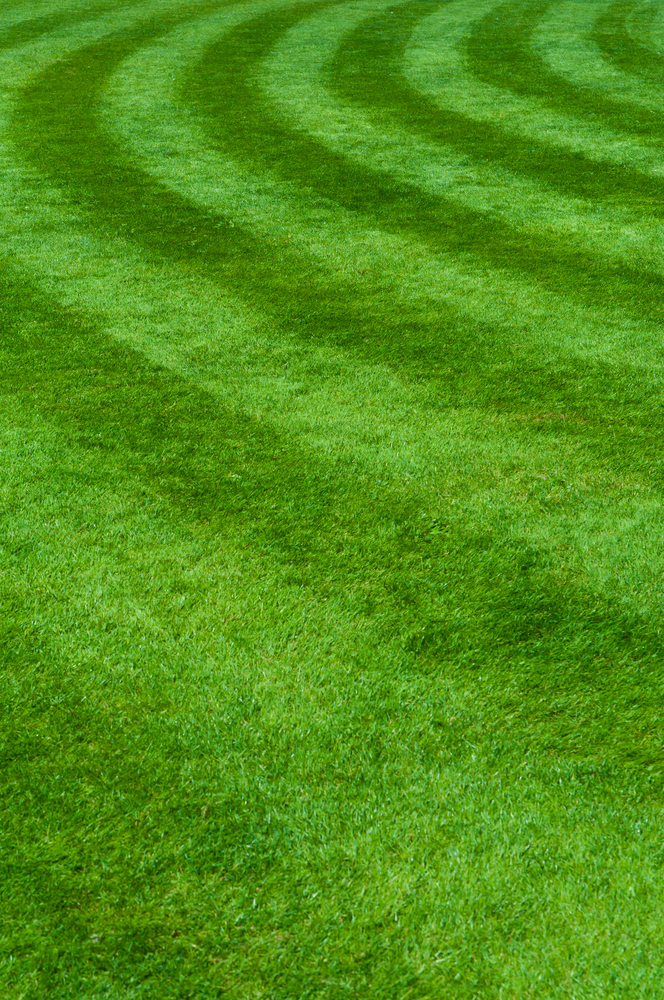Town and Country Lawn Service