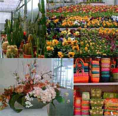 Garden Pregno