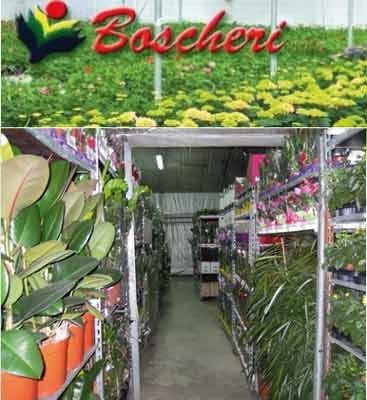 boscheri vivai piante articoli da giardino al