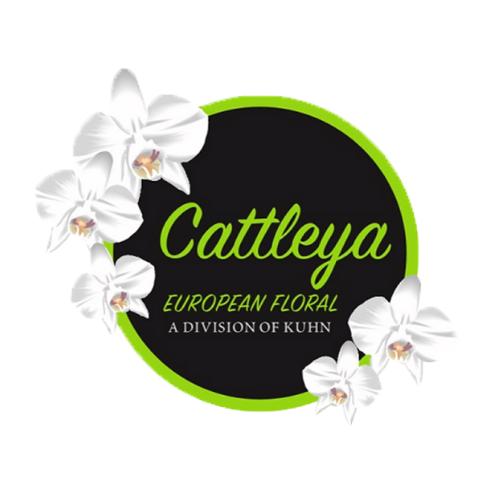 Cattleya European Floral