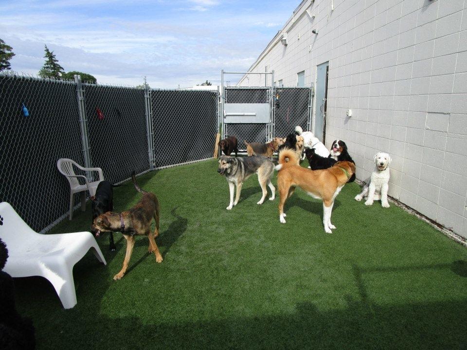 Ruff Spot Dog Day Care & Spa Sherwood Park (780)464-7833