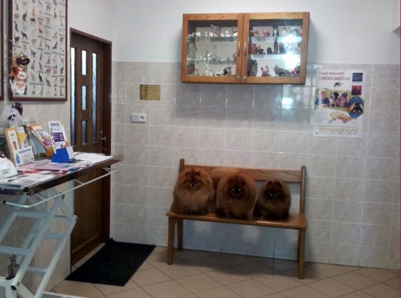 Bohuslav Vlček MVDr. - veterinární klinika