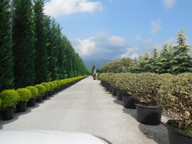 Tuincentrum Beuken A vd