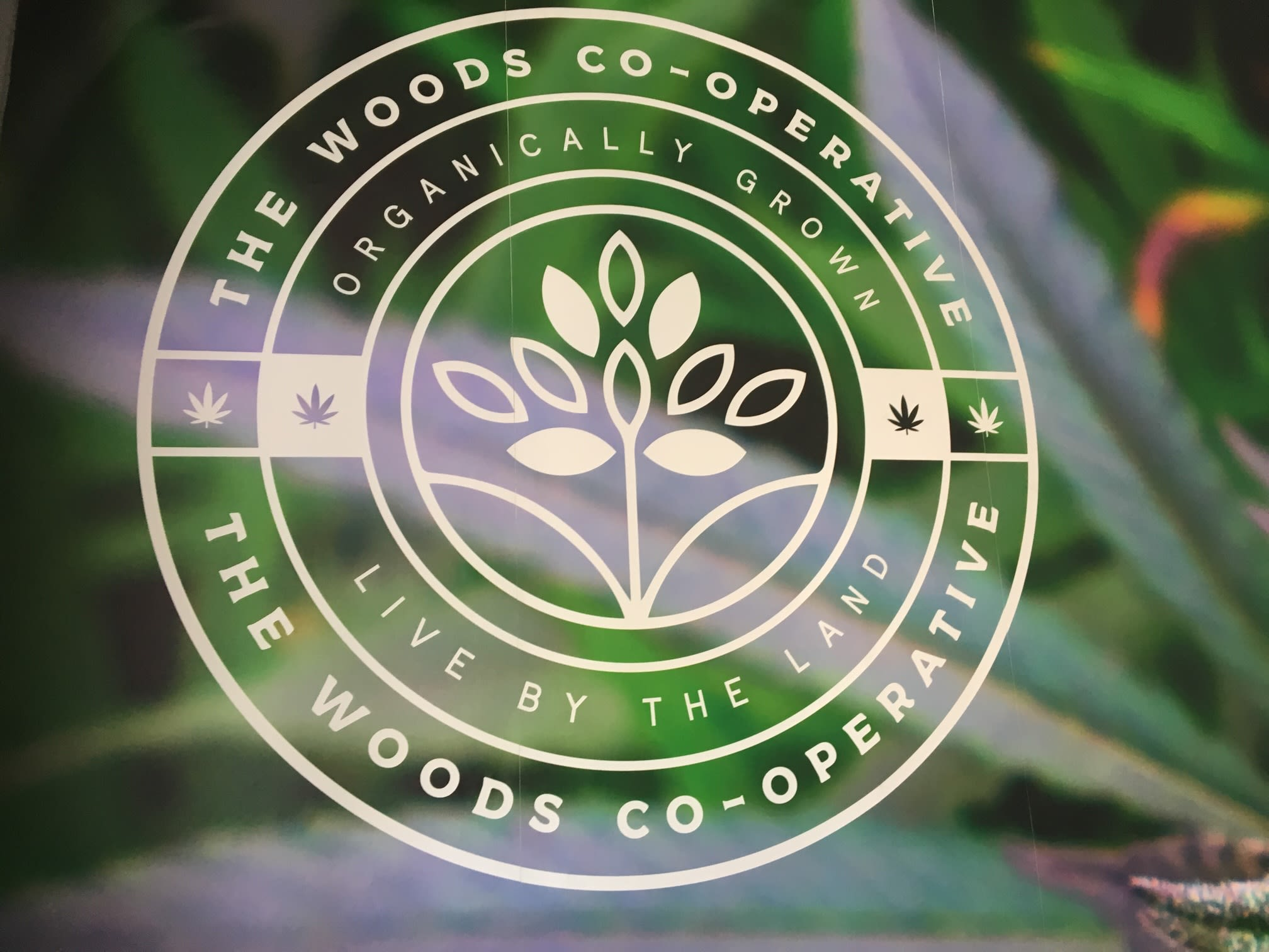 Images The Woods Co-Op