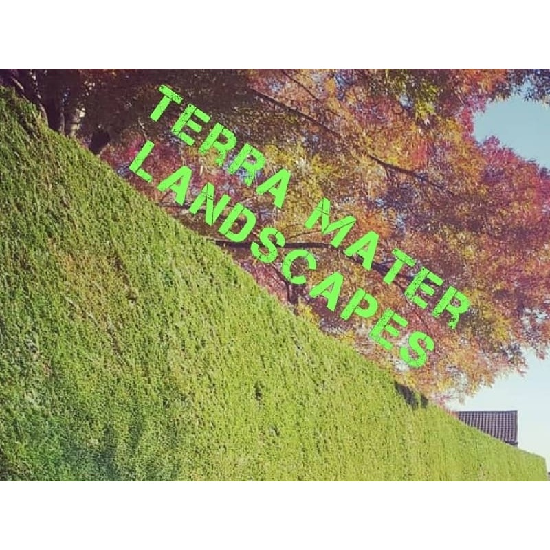Terra Mater Landscapes - Reading, Berkshire RG8 8BX - 07802 755033 | ShowMeLocal.com