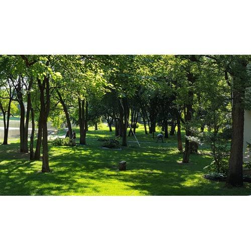 Parrish Tree Services