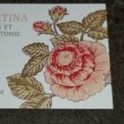 Lingerie Bertina