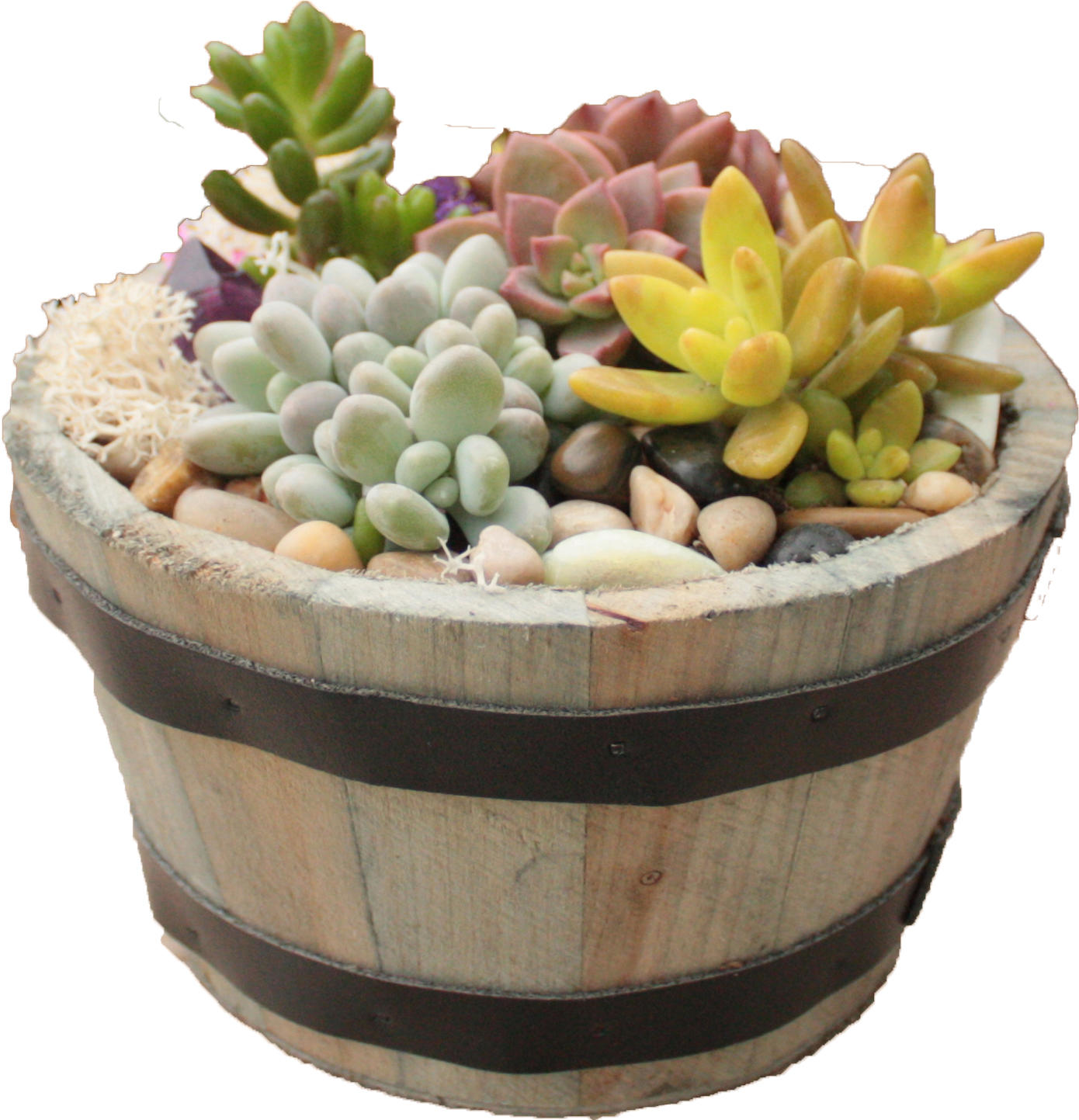 Paint Nite - Succulents in Whiskey Barrel