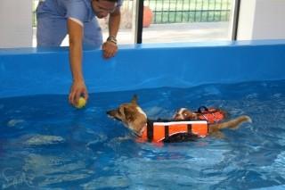Hurstbourne animal hosp louisville kentucky ky Stony brook swimming pool hours