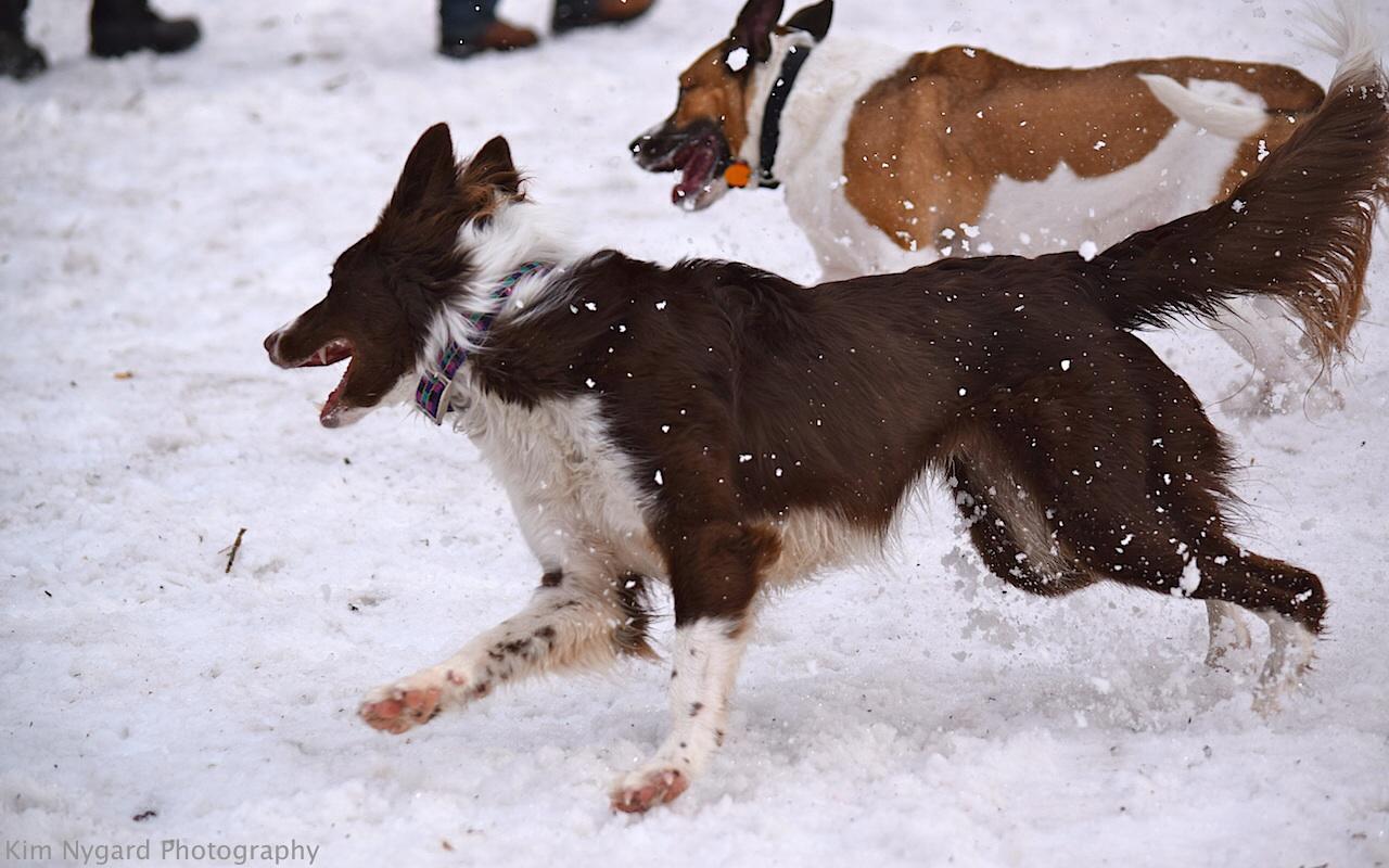 Positive Dog Training Near Me