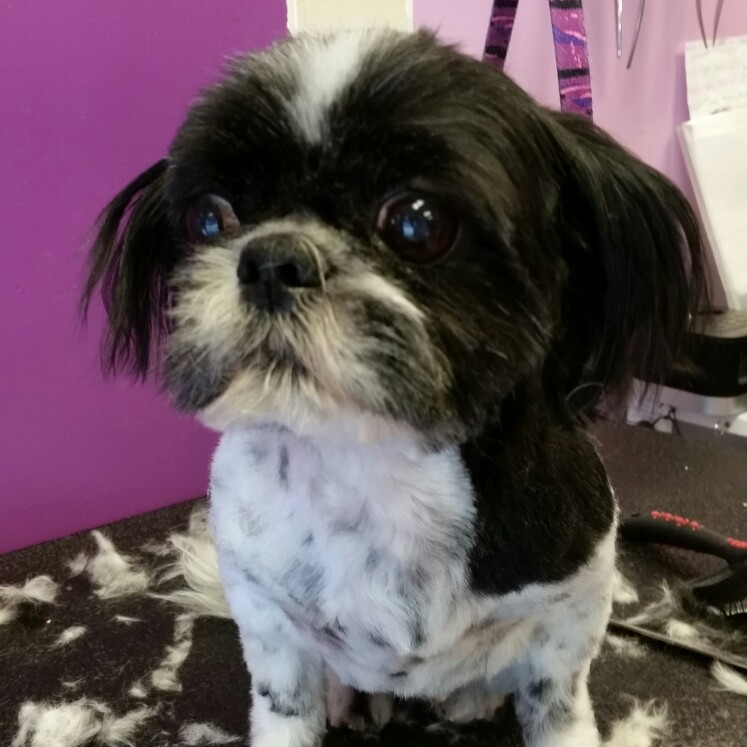 Dog Grooming Broomfield Co