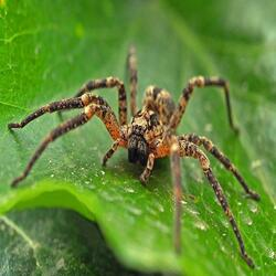 Evolve Pest Control