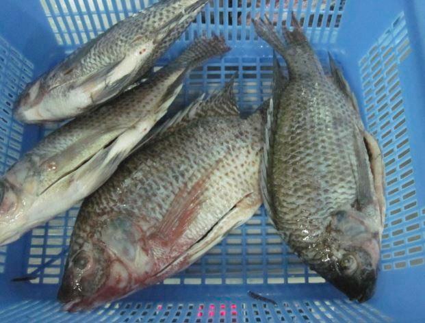 Blue Ocean Seafood
