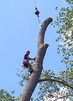 Arbor Tree Service in Barnegat, NJ with Reviews - YP.com