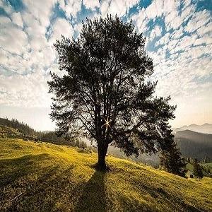 TreeFrog Climbing LLC - McLean, VA 22102 - (540)522-5905 | ShowMeLocal.com
