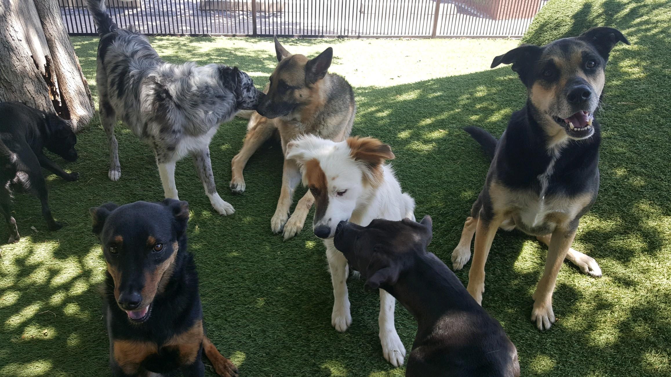 Tempe Lake Veterinary Clinic & Pet Resort
