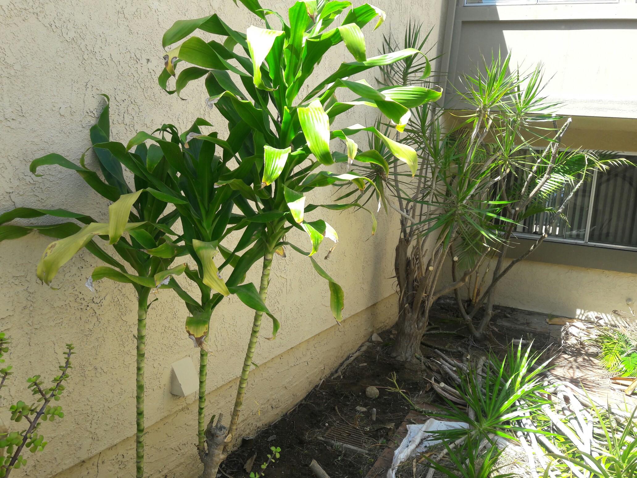 Sanchez gardening services anaheim california for Local gardening services