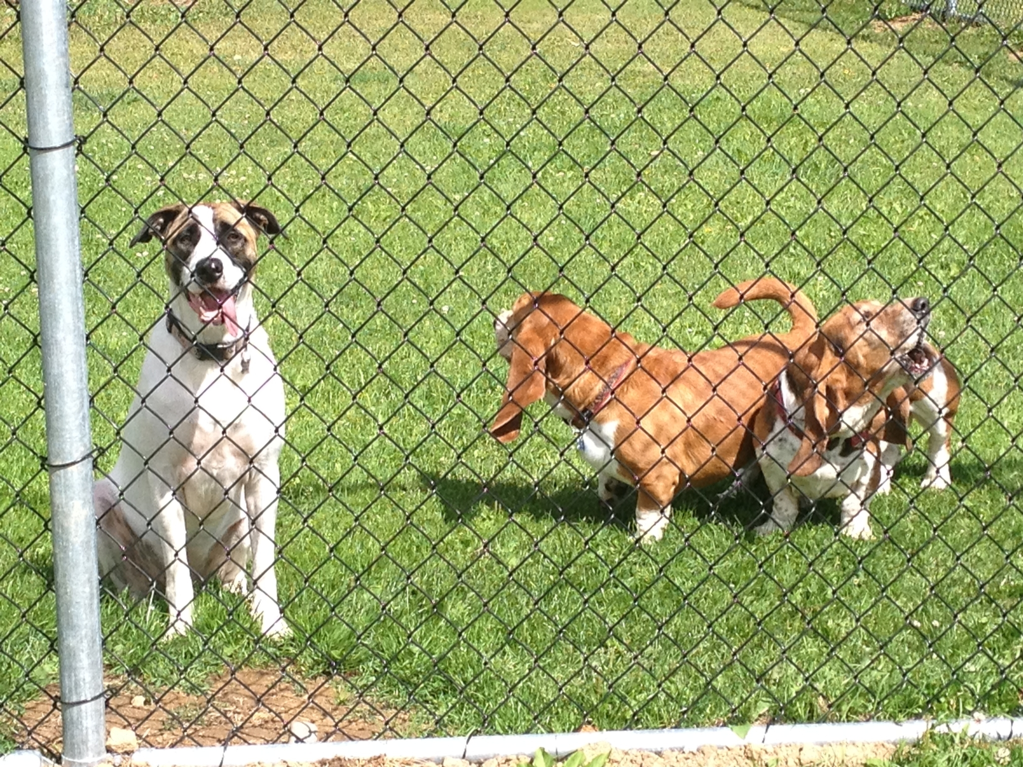 Canadian All Breed Boarding Kennels in Prince George