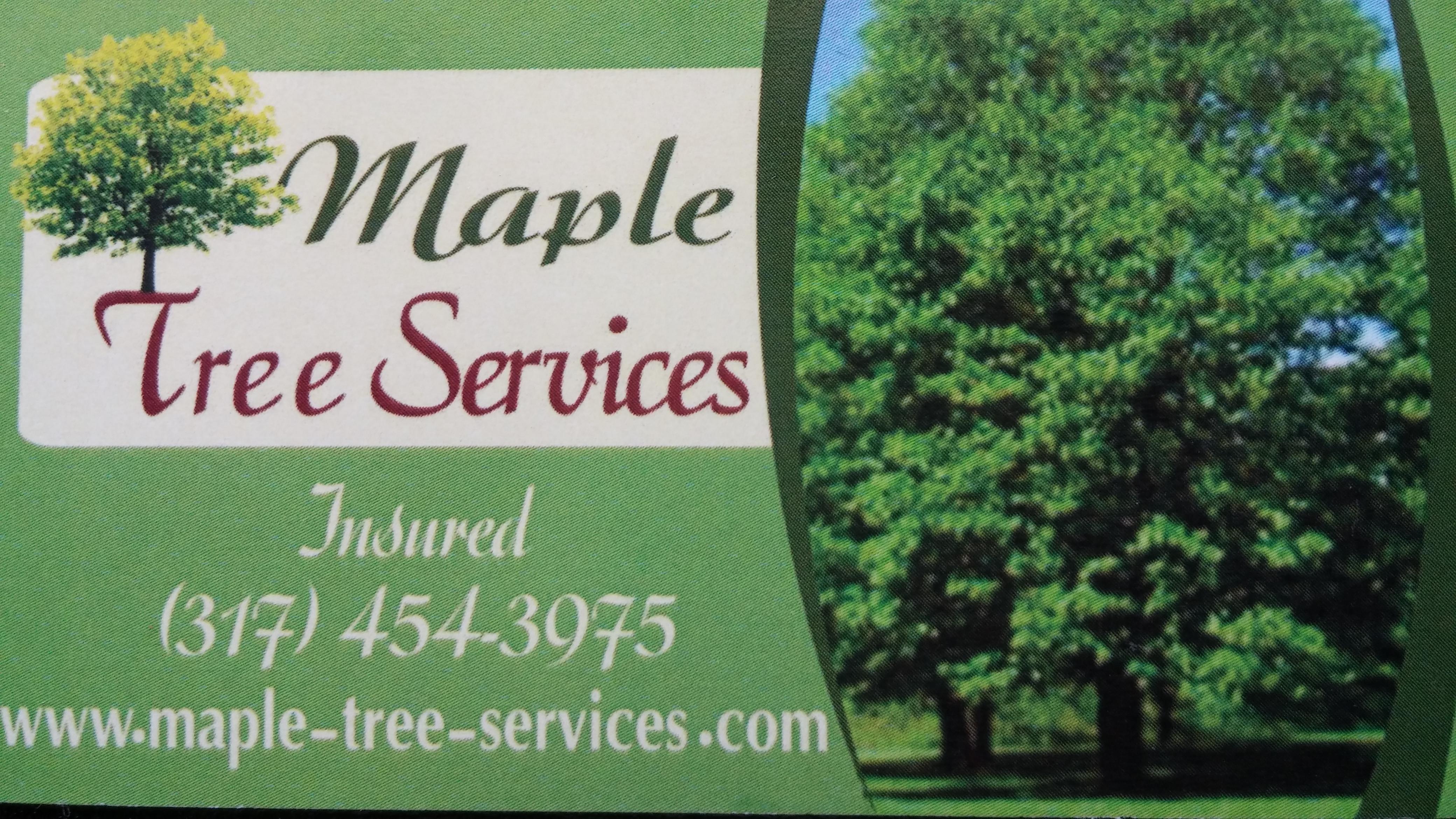 Maple tree service
