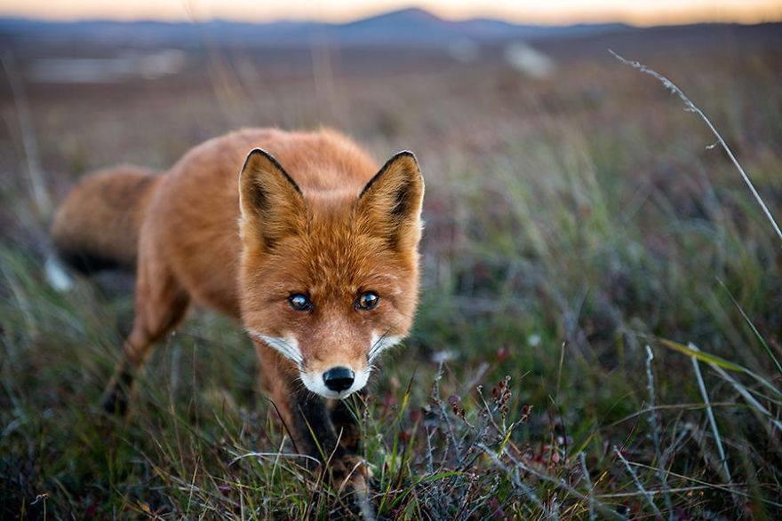 Mass Bay Wildlife Management Inc