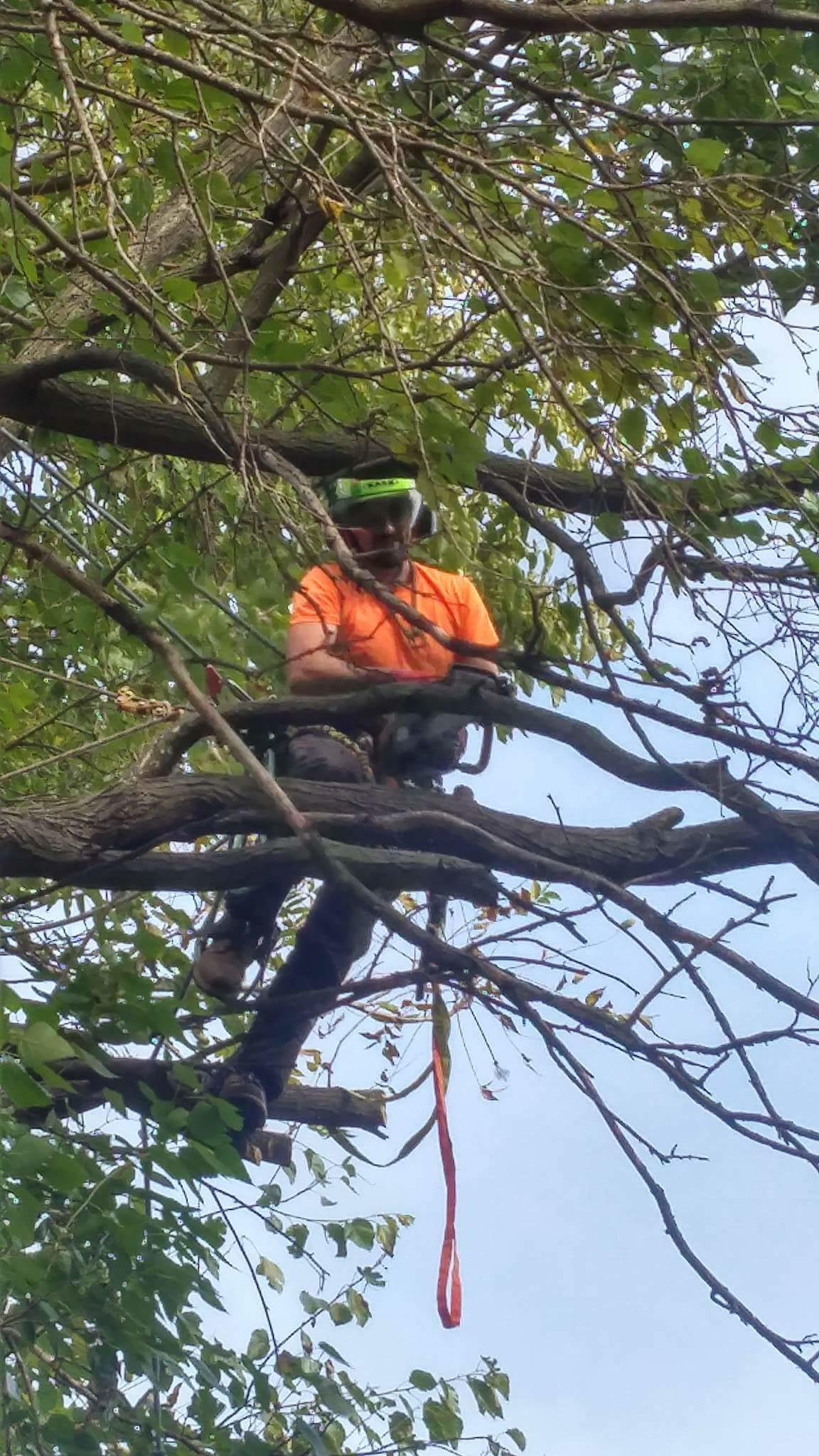 Artisan  Arborist Tree Care