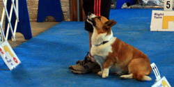 4 Paws DogWorks image 0
