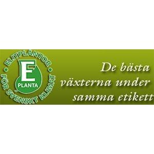 E-planta ekonomisk förening