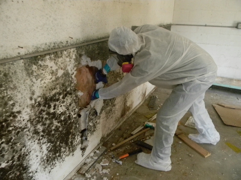 OD Construction Mold Remediation in Long Beach California
