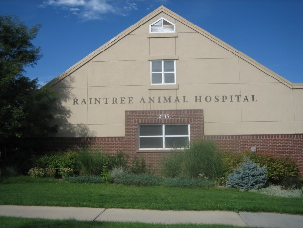 Raintree Animal Hospital In Fort Collins, Co 80526. Cancer Early Signs. Zebra Print Signs Of Stroke. Receptor Encephalitis Signs. Glove Signs. Dented Signs. Hour Signs. Acute Pancreatitis Signs. Departure Signs