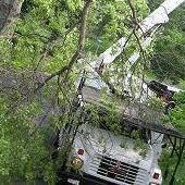 Paul John's Tree Service